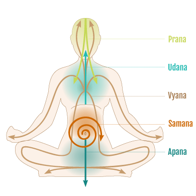 the pranic energy 5 prana vayus in yoga an aashish nanda initiative