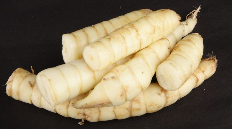 Arrowroot is easily digestible, gluten-free starch and is used in diets requiring flavourless, low-salt and low-protein foods.