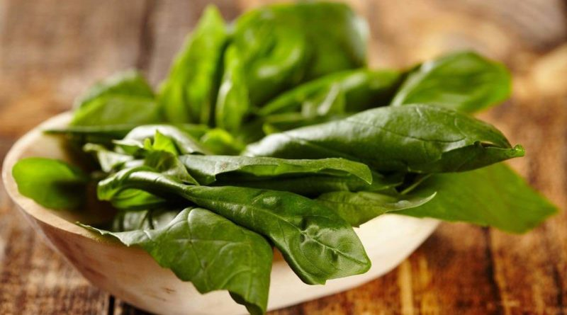 Sweet Basil is used for cooking purpose whereas holy 'tulsi' basil is consumed mainly for its medicinal benefits.
