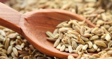 Aside from its culinary use, fennel is part of Ayurveda science for it offers amazing health benefits. Fennel is also used as an organic mouth fresher.