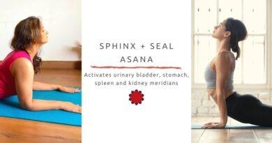 spinx seal yoga asana activates urinary bladder, stomach, spleen and kidney meridians